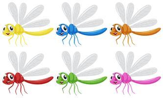 Set Libelle Zeichen vektor