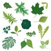 Naturblad ikonuppsättning. Ört blommönster. Sommarbladen säsong samling vektor