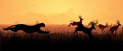 Gepard, der Rotwildschattenbild jagt vektor