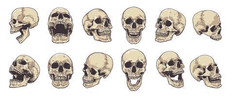 Anatomischer Schädel-Vektor-Satz
