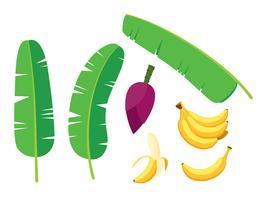 Sammlung von frischen Bananen Palme Vektor festgelegt