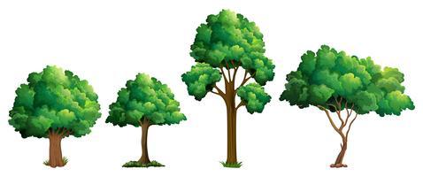 Satz unterschiedliches Baumdesign vektor