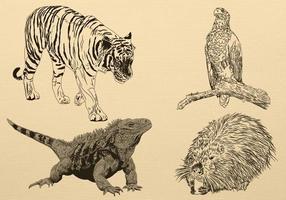 Handdragen Animal Vector Pack