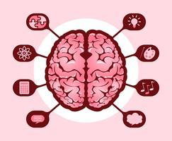 Gehirnhälften des Menschen