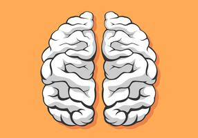 Svart och vitt mänsklig hjärnhalvfigur vektor