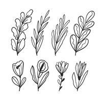 Handgezeichnete Blätter und Blumen Sammlung vektor