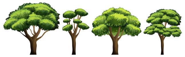 Satz des unterschiedlichen Baums