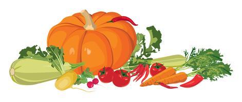 Reifes Gemüse. Stillleben mit frischem bäuerlichem Essen vektor