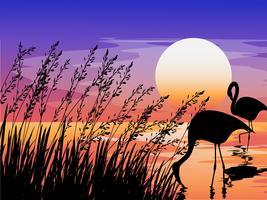 flamingo i solnedgången