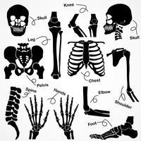 Sammlung menschliches Skelett