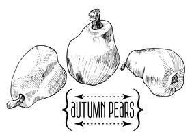tappning illustration av pärl akvarell och skiss vektor