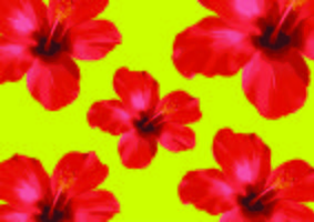 Röda Hibiscusblommor, blommig vektor Illustration på svart bakgrund.