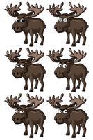 Elch mit verschiedenen Gesichtsausdrücken vektor
