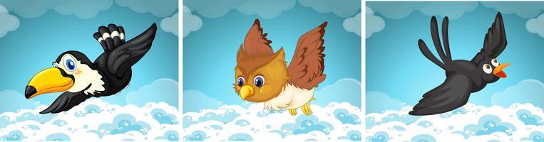 Vilda fåglar som flyger på himlen