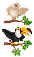 Uggla och tucanfåglar på grenarna vektor