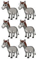 Esel mit verschiedenen Gesichtsausdrücken
