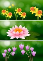Tre scener med tre olika blommor