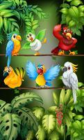 Vilda fåglar står på grenen