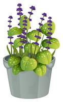 Lavendelblumen im Blumentopf vektor