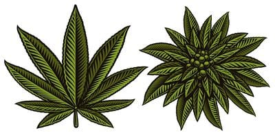 Vektor illustration av cannabis leafs