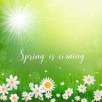 Frühlingshintergrund mit weißen Blumen im Gras.