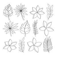 Exotiska tropiska blommor och lämnar handen rita set vektor
