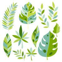 Vektor tropiska växter och löv. Botaniska exotiska blad.