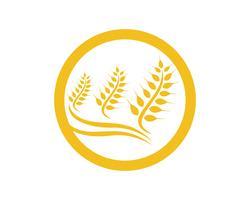 Landwirtschaftsweizen Logo Template-Vektorikonendesign vektor