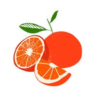 Färska citronfrukter, samling av vektorillustrationer vektor