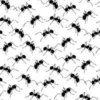 Svarta myror på vit sömlös bakgrund.