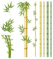 Satz der Bambuspflanze vektor