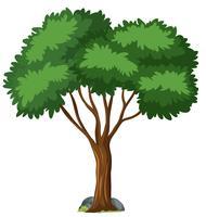 Getrennter Baum auf weißem Hintergrund vektor