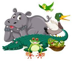 Gruppe des wilden Tieres