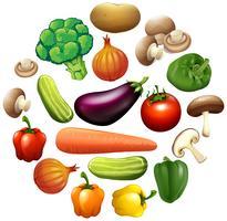 Olika slags grönsaker vektor