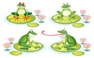 Satz des Frosches auf Lotosauflage vektor