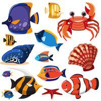 Eine Reihe von Meerestieren
