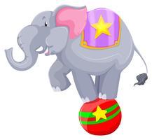 Grauer Elefant, der auf der Kugel balanciert