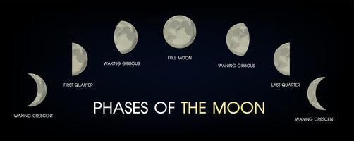 Die Mondphasen.