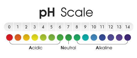 Diagrammet visar det sura, neutrala och alkaliska pH-värdet för olika vätskor och lösningsmedel. Vektor illustration.