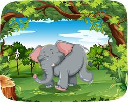 Elefant in freier Wildbahn vektor