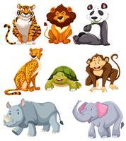 Set süße Tiere vektor