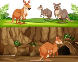 Känguru i naturlandskap vektor