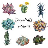 Sats av succulenter. Vattenfärg. Graphics.Isolated objects. Vektor illustration.