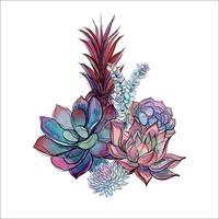 Bukett med succulenter. Blommarrangemang för design. Vattenfärg. Grafik. Vektor.