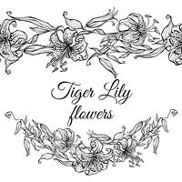 Tiger Lily mönster gräns och kransar av blommor. Färg vektor