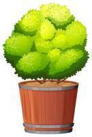 Eine Pflanze im Topf