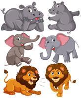 Set av afrikanska djur vektor