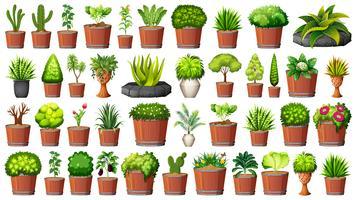 Sats av olika växter i krukor