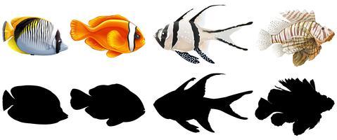 Sats med saltvattenfisk vektor