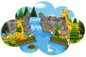 Vilt djur vid vattenfallet